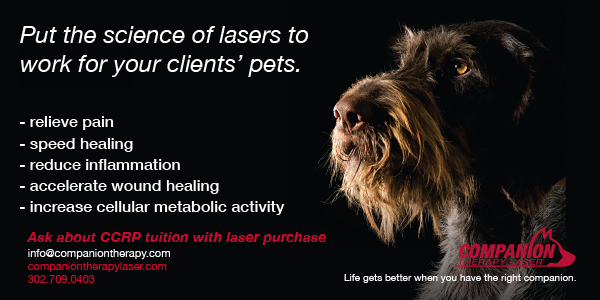 Companion Therapy Laser ad