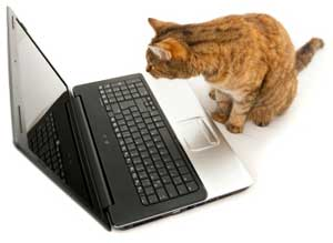 Cat looking at computer