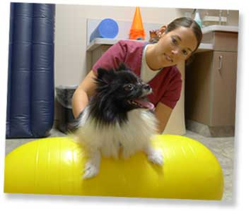 Charleston Veterinary Referral Center