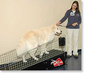 Dog on land treadmill